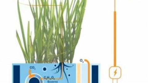 De l'énergie grâce aux racines des plantes