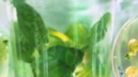 Le secteur de la chimie végétale en pleine croissance – Techniques de l'Ingénieur