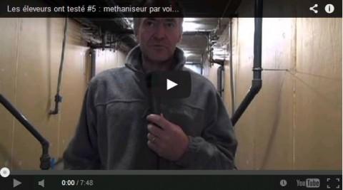 Engraisser des taurillons et produire du biogaz