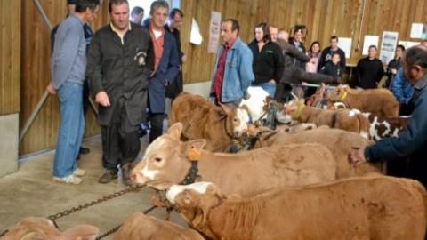 La filière viande ouvre grand toutes ses portes