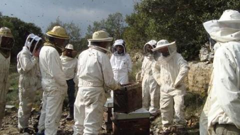 Les apiculteurs du Languedoc-Roussillon en état de calamité agricole