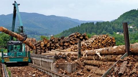 La Région s'engage pour soutenir la filière bois