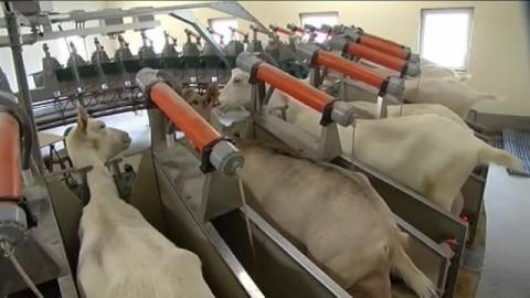 De la viande au lait et du conventionnel au bio : s'adapter en agriculture