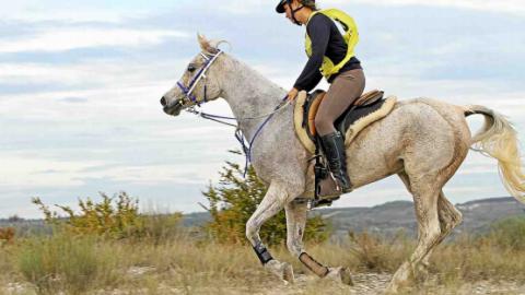 À La Fichade (Vébron) des éleveurs de chevaux pour une clientèle du Golfe